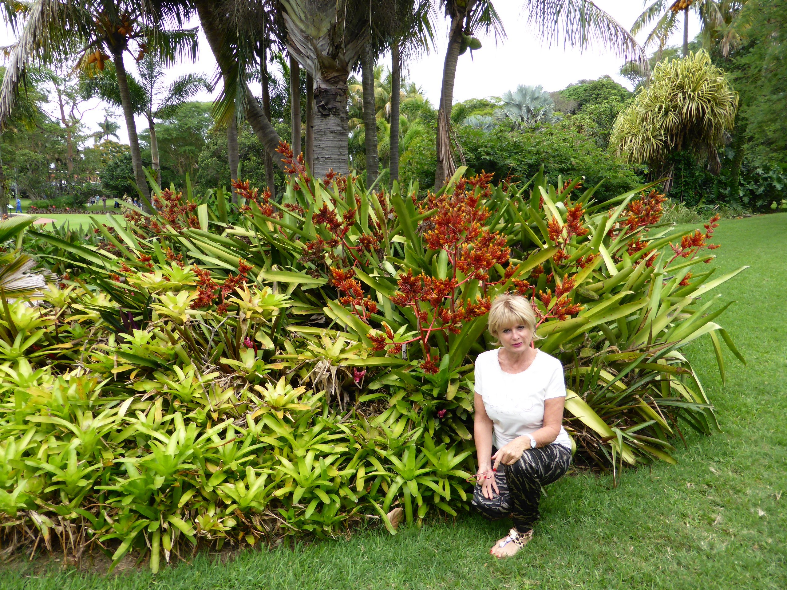 Durban 7 avril 2015 mielicharme for Jardin botanique noel 2015